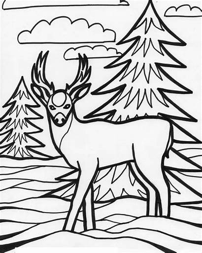 Coloring Deer Pages Printable Animal Animals Wild