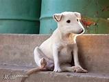 mexican rat dog | Rat dog, Dogs, Animals