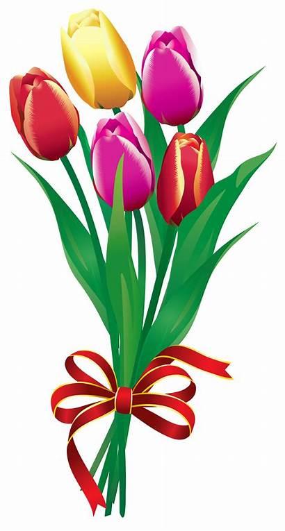 Clipart Flower Bouquet Bunches Clip Tulip Cliparts