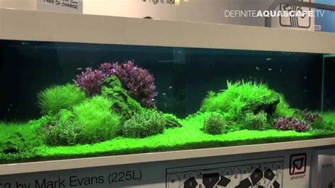setup aquascape aquascaping tropica planted aquariums at interzoo 2012