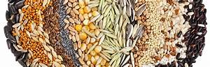 The Secret to Starting Seeds - Garden Weasel