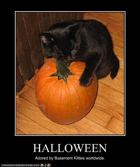 email forwards fun pumpkins cute  funny