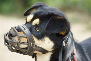 Aprende Como Hacer Un Bozal Para Perro   U00a1f U00e1cil Y R U00e1pido