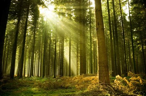 forest wallpaper sunshine - HD Desktop Wallpapers   4k HD