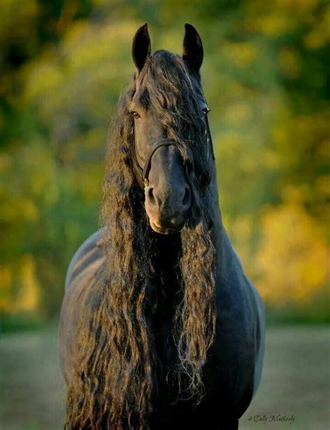 echte pferde kaufen fuer facebook bilder und sprueche fuer