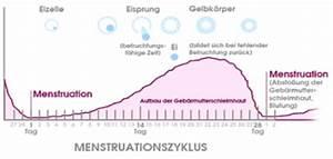 Ovulationstests Eisprungtest