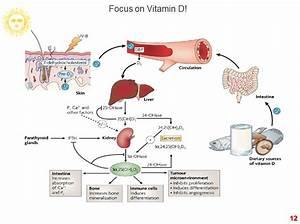 Health U0026gt Mind Body  Vitamin D