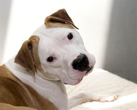 ehrlichiosis in dogs news ehrlichiosis