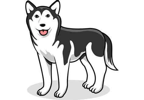siberian husky vector dog   vector art stock graphics images