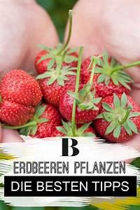 Wann Heidelbeeren Pflanzen : 69 besten balkon garten bilder auf pinterest ~ Orissabook.com Haus und Dekorationen