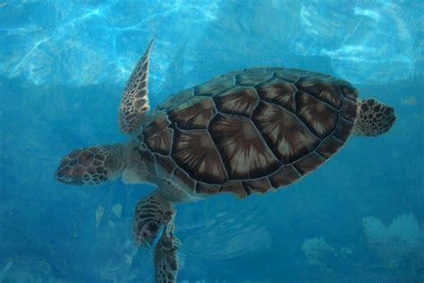 He swam in a puddle. Tortugranja: The Little Turtle Farm on Isla Mujeres ...