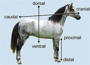 Dorsal Ventral Anterior Posterior Diagram