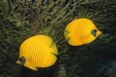 butterflyfish kids answers