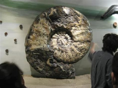 gambar gambar fosil hewan puba terbaru  menakjubkan