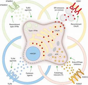 Frontiers   Combinatorial Strategies for the Induction of ...