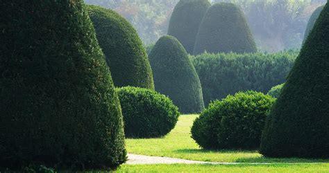 koniferen schneiden wann koniferen schneiden wann koniferen schneiden 4 schnitte in 2 jahreszeiten thuja hecke pflanzen