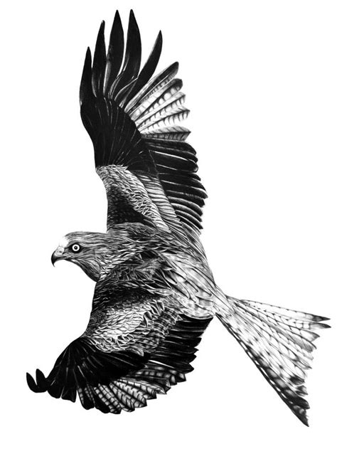 Red Kite- The Menagerie Group Show | Red kite, Kite tattoo, Birds