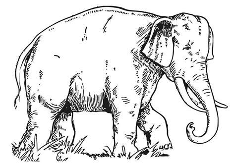 bilde  fargelegge elefant bil  images
