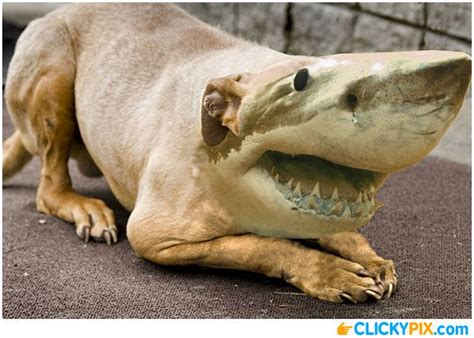 shark hybrid animals  shark combo pictures cool art