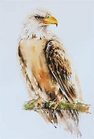 Painting Watercolor Bird Art