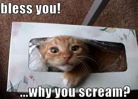 Bless You..why You Scream