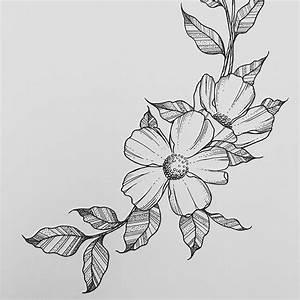 Best 25+ Flower drawings ideas on Pinterest   Flower ...