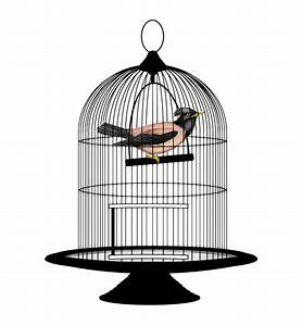 Bird Cage Png | www.pixshark.com - Images Galleries With A ...
