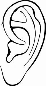 Ear Clipartmag Drawing Parts sketch template