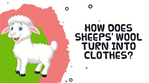 how does sheep wool turn into clothes interesting facts 805 | maxresdefault