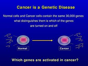 Chromosomes  Dna  And Genes Gene