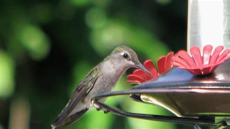 what kind of food do you put in a hummingbird feeder