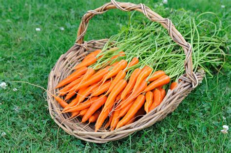 how to carrots from the garden haniela s carrots from the garden