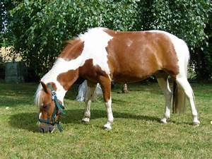Combien De Chevaux : combien de kilos de foin pour un poney au pr s ~ Medecine-chirurgie-esthetiques.com Avis de Voitures