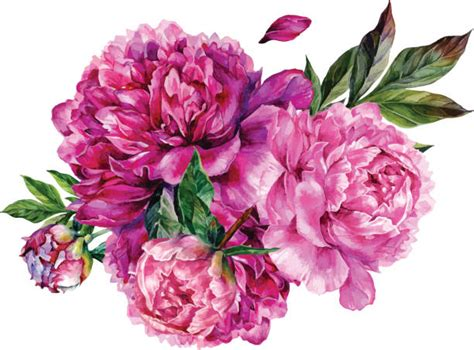 peony clipart top bunch of flowers clip vector graphics and