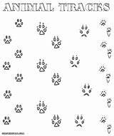 Tracks Coloring Designlooter Scat Signs Animal sketch template