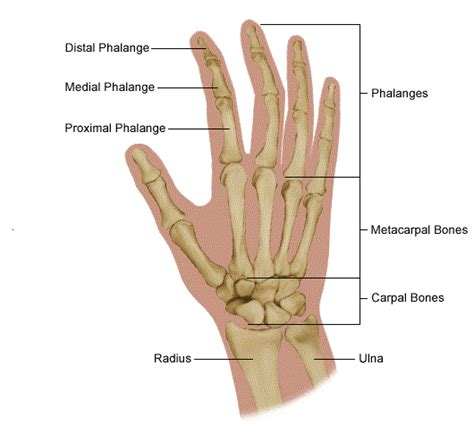 Medical Pictures Info Carpal Tunnel Syndrome