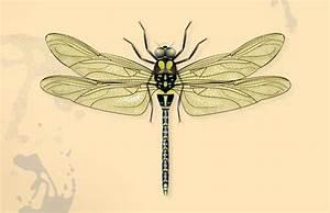 100 Best Images About Dragonflys On Pinterest
