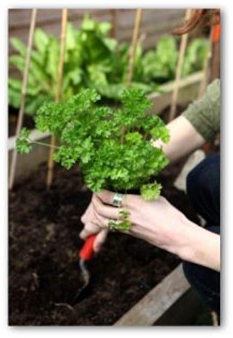 patio vegetable garden ideas  small spaces