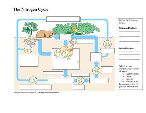 phosphorus cycle worksheet middle school phosphorus best