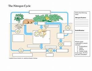Nitrogen Cycle Diagram Worksheet. Lesupercoin Printables ...