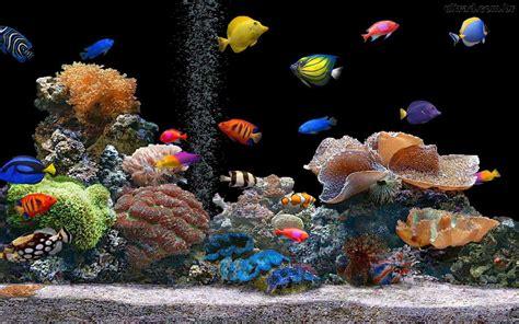 3d Animated Aquarium Wallpaper Free - aquarium 3d wallpaper animated anime wallpapers