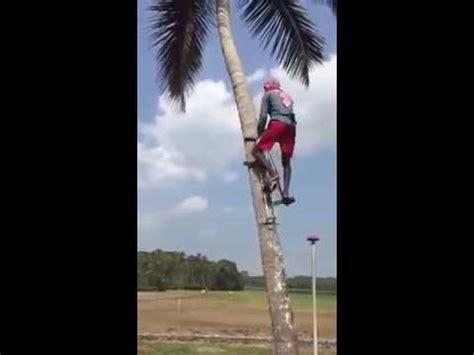alat untuk memanjat pohon kelapa youtube