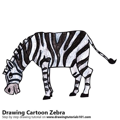 learn   draw  cartoon zebra cartoon animals step