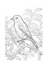 Coloring Bird State York Bluebird Eastern Birds Pages Missouri Drawing Printable Flag Symbols Eye Desenho Para Animais Getdrawings Dot Da sketch template