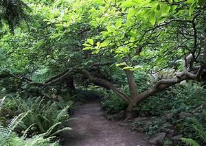 Wege Im Garten : wege gartenwege anlegen 03 pfad im garten von einer ~ Lizthompson.info Haus und Dekorationen