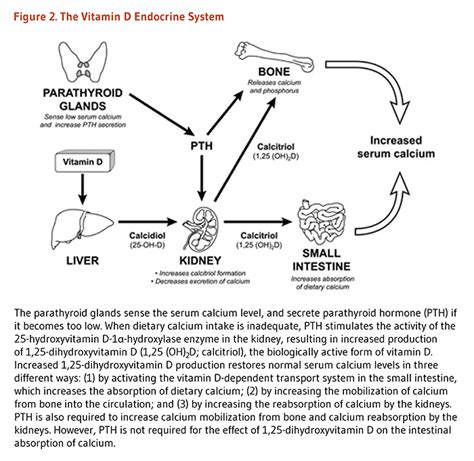 vitamin d mechanism of time of care