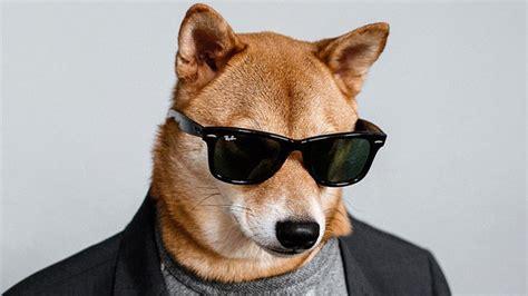 interview   instapet menswear dog instylecom