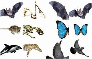 Convergent evolution | DragonflyIssuesInEvolution13 Wiki ...
