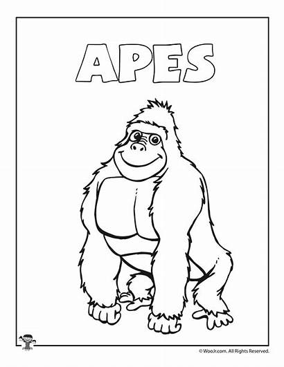 Coloring Apes Ape Activities Daughters