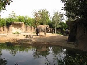 Asian Elephants Habitat